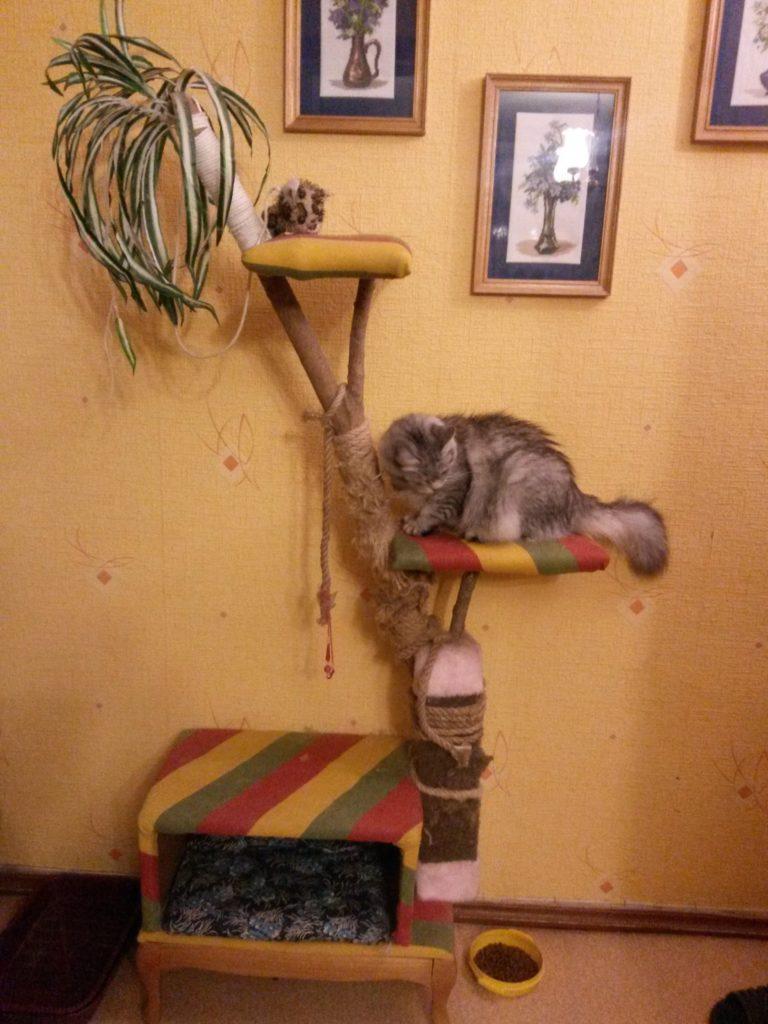 Как сделать квартиру удобной для кота?