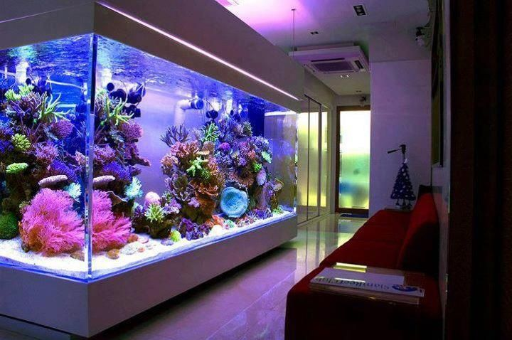 Завораживающий подводный мир в вашем доме – аквариум в квартирном интерьере