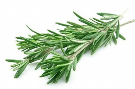 Средиземноморские ароматы круглый год: выращивание розмарина в квартире и его применение